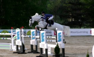 - Sporthorses for sale