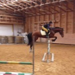 Sporthorses for sale